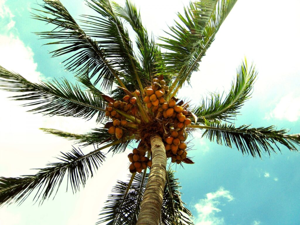 Élvezd a napsütést Miamiban ESTA kérelem igénylésével!