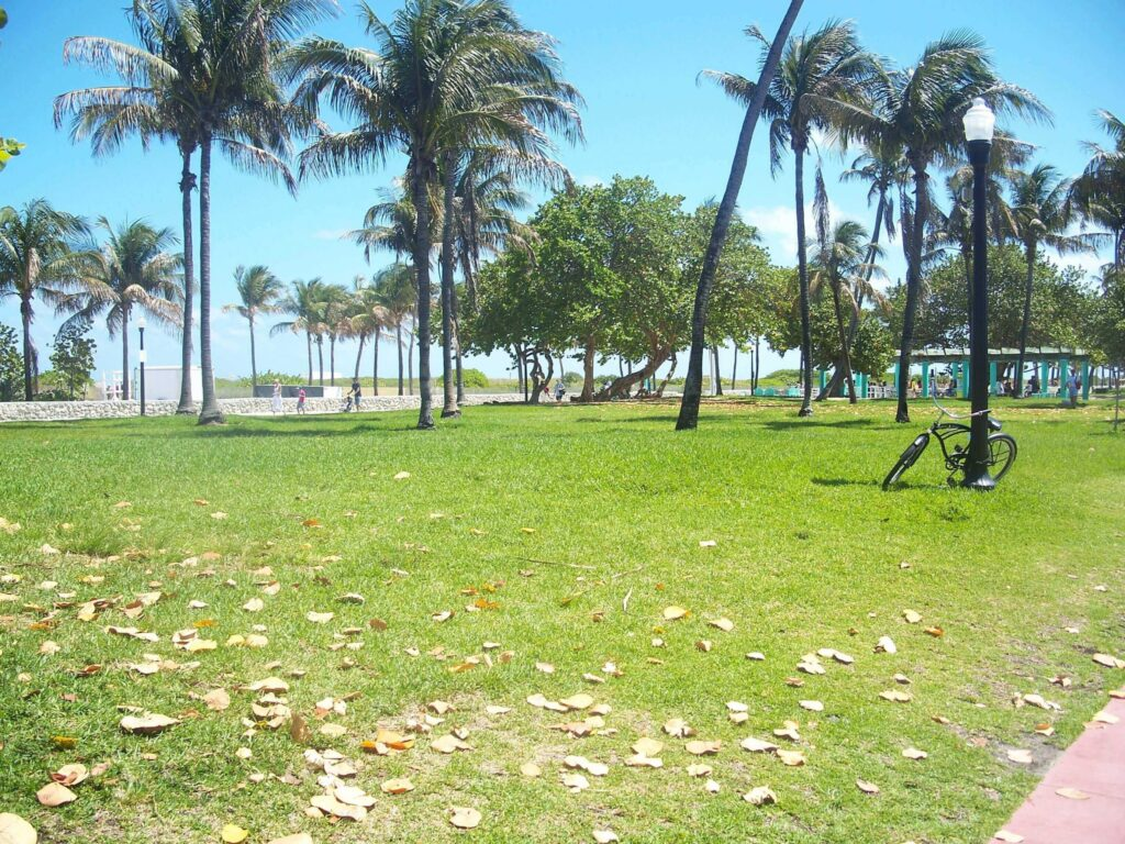 Sétálj egyet a Lummus Park-ban!