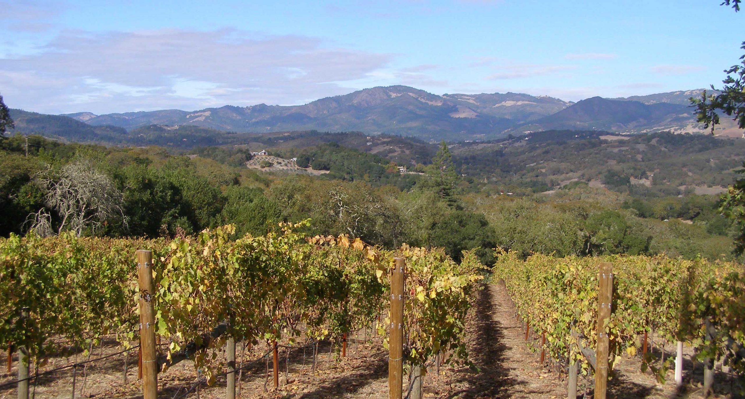 Kalifornia, a bor országa