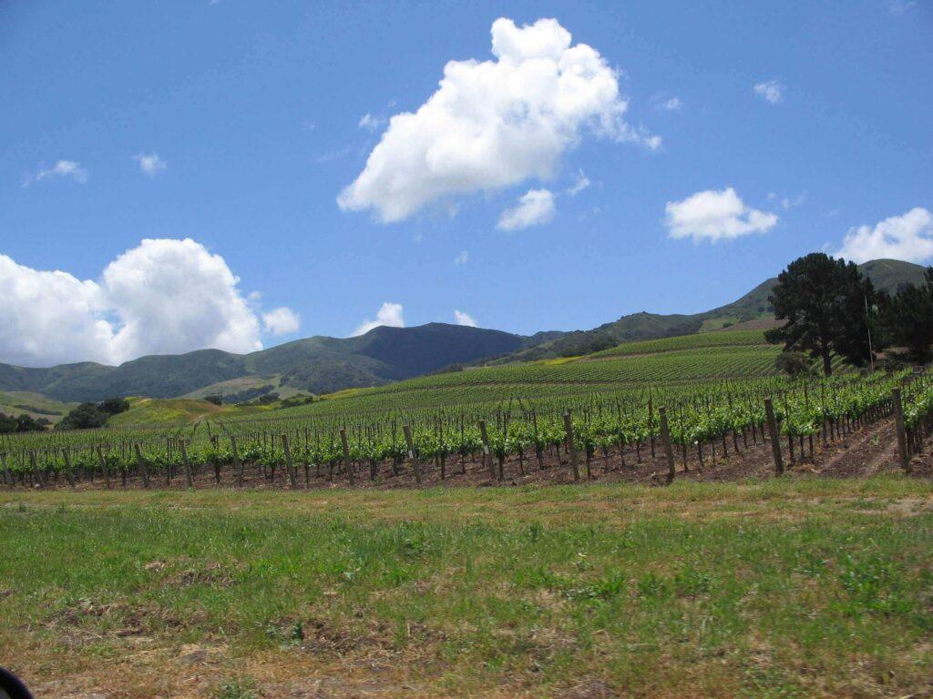 Central Coast Wineries borvidék, USA