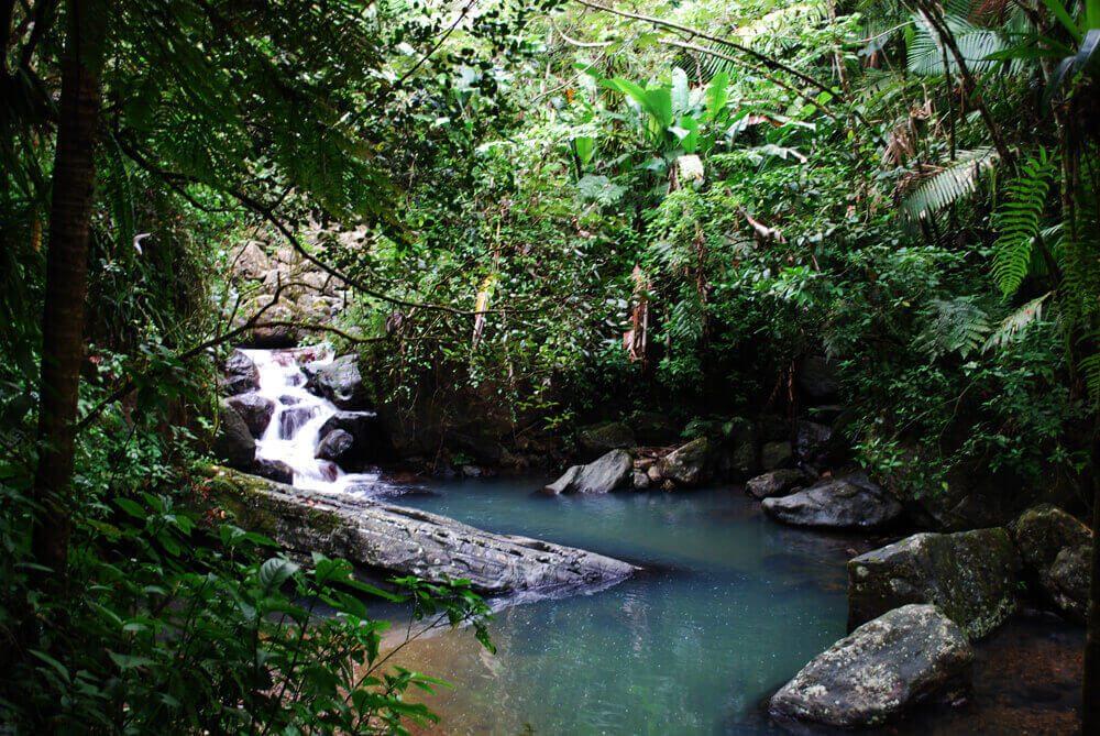 Kirándulj El Yunque esőerdőjében!